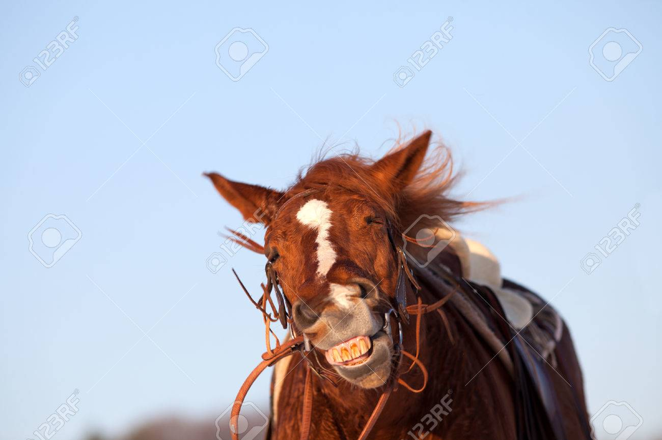 Funny horse make smiling face stock photo 75009281