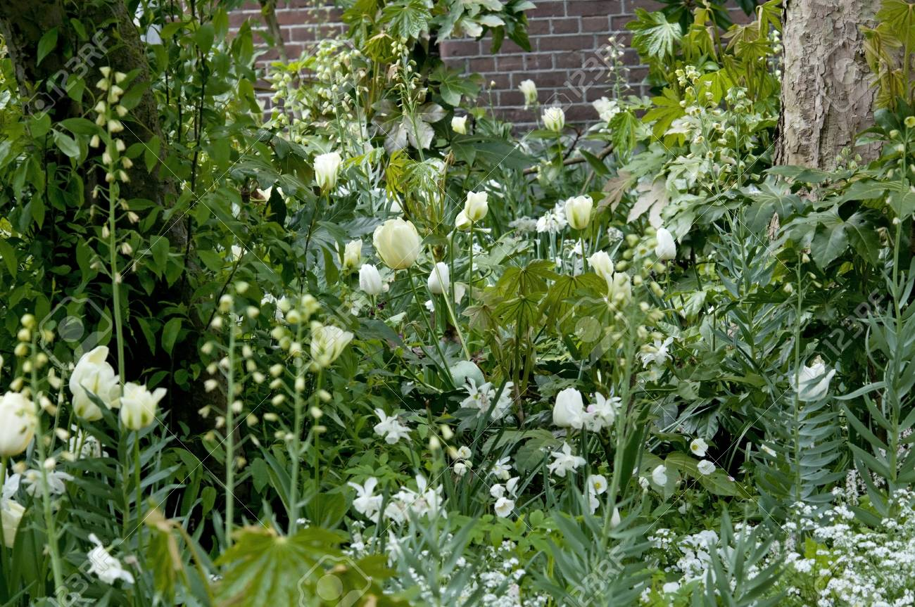 White Flowers From Bulbs In A Garden Stock Photo Picture And