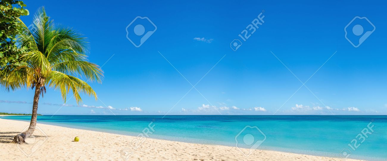 Exotic beach with gold sand, coconut palm tree and deep blue sky, Caribbean Islands Stock Photo - 40181232