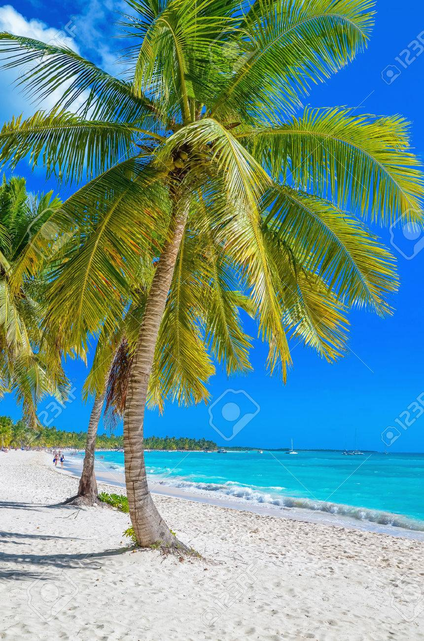 Exotic Caribbean beach with white sand and beautiful palm trees Stock Photo - 40181803