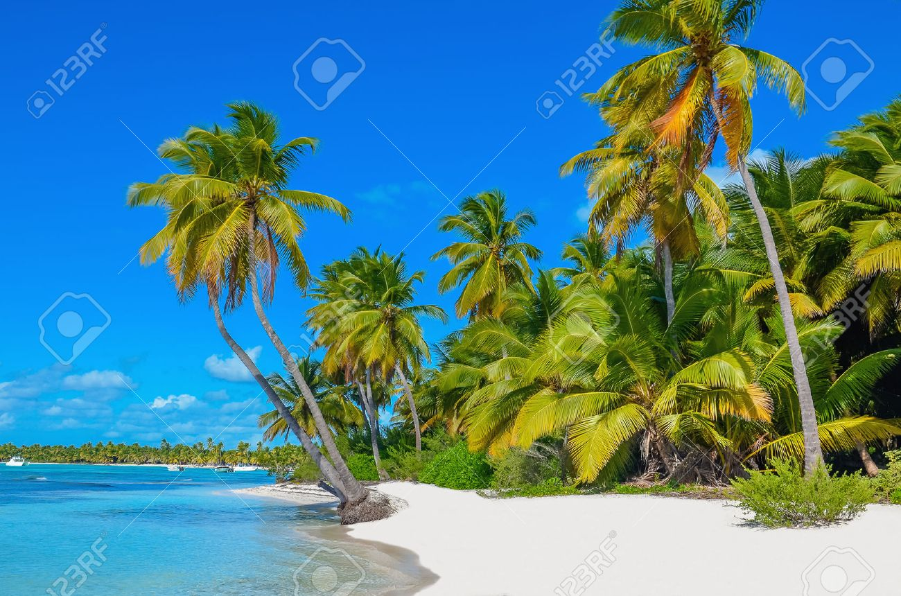 Amazing view of Caribbean beach with white sand and beautiful exotic palm trees Stock Photo - 40181830