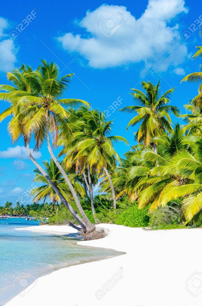 Amazing view of Caribbean beach with white sand and beautiful exotic palm trees Stock Photo - 40181838