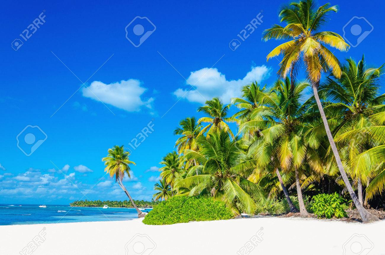 Amazing tropical beach with palm tree entering the ocean against azur ocean, gold sand and blue sky Stock Photo - 40181888