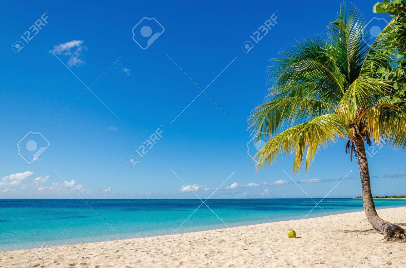 Exotic sandy beach with palm and coconut against blue sky and azure water Stock Photo - 40514968