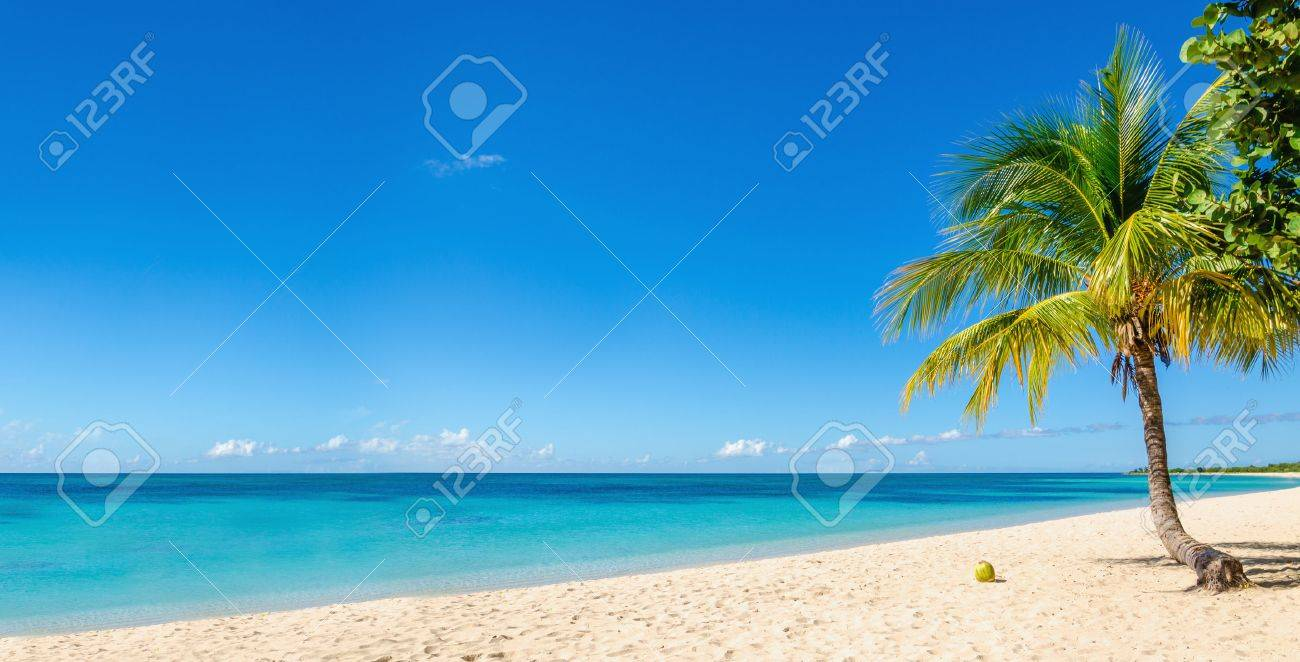 Amazing sandy beach with coconut palm tree and blue sky, Caribbean Islands - 40513553