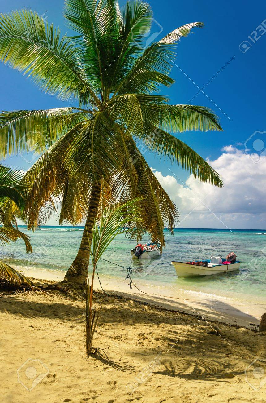 Amazing palm tree on caribbean beach with boat Dominican Republic, Caribbean Stock Photo - 87322941