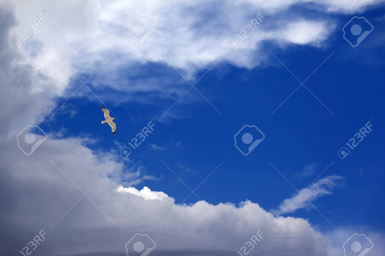 Seagull hover in blue sky with clouds Stock Photo - 14576474