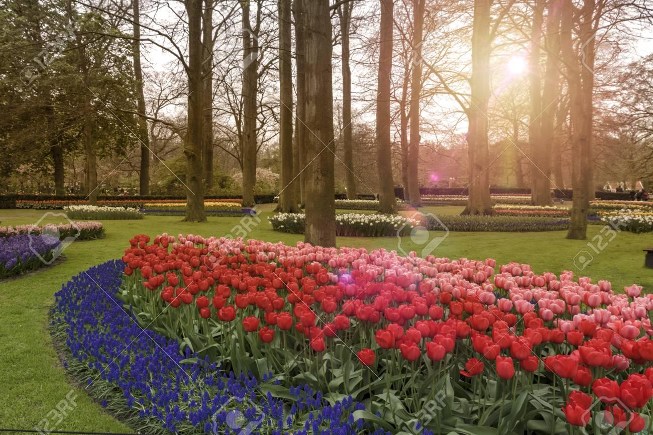 Sunrise On The Beautiful Keukenhof Garden In Lisse City Stock Photo ...
