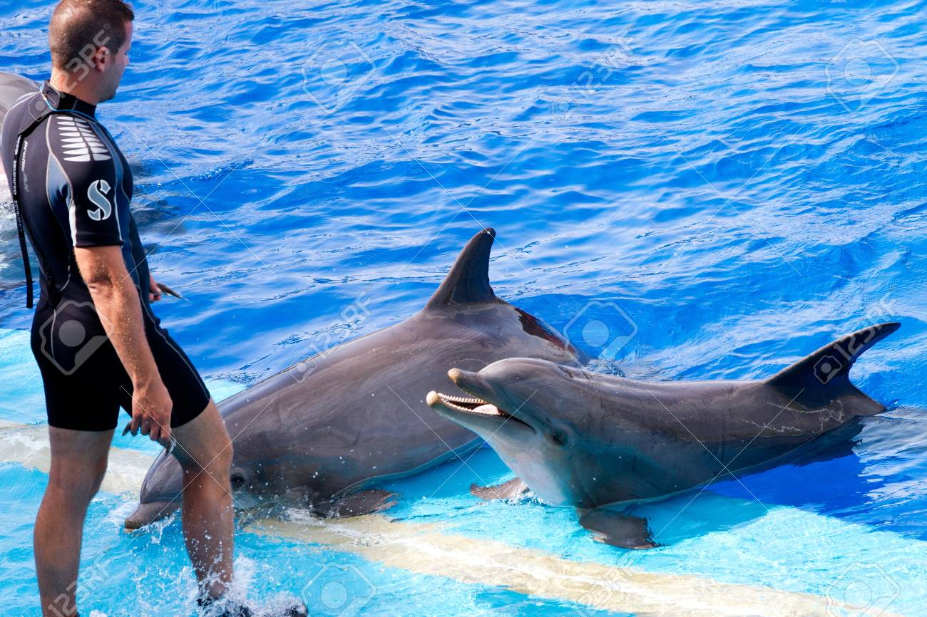 Dolphins' show at the Oceanographic (Valencian: L'Oceanogr�fic, Spanish: El Oceonogr�fico) in The City of Arts and Sciences (Valencian: Ciutat de les Arts i les Ci�ncies, Spanish: Ciudad de las Artes y las Ciencias) on July 28, 2011 in Valencia, Spain Stock Photo - 11828378