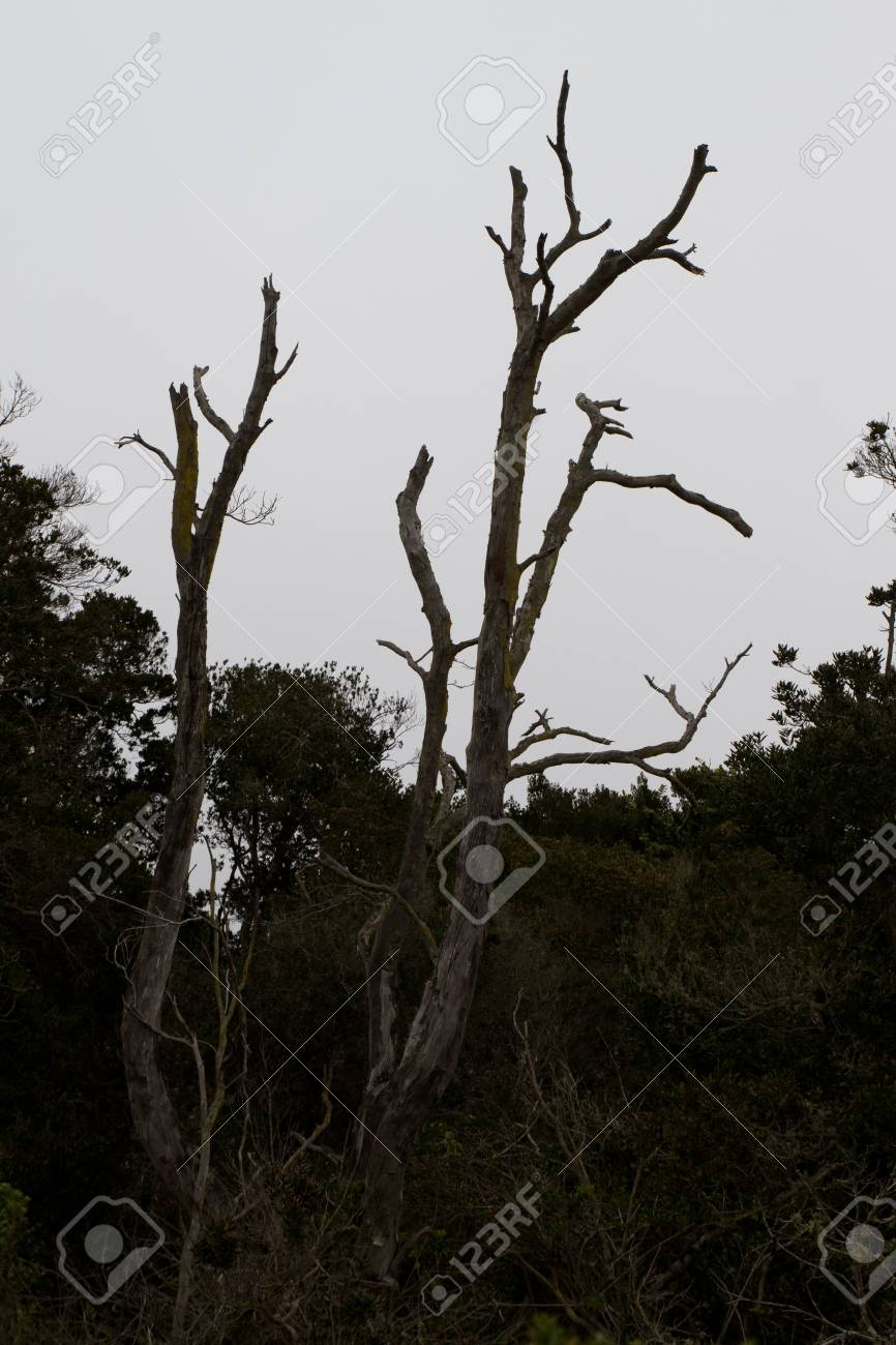 Bosque De Fray Jorge National Park Bosque Fray Jorge National Stock Photo Picture And Royalty Free Image Image 25359724