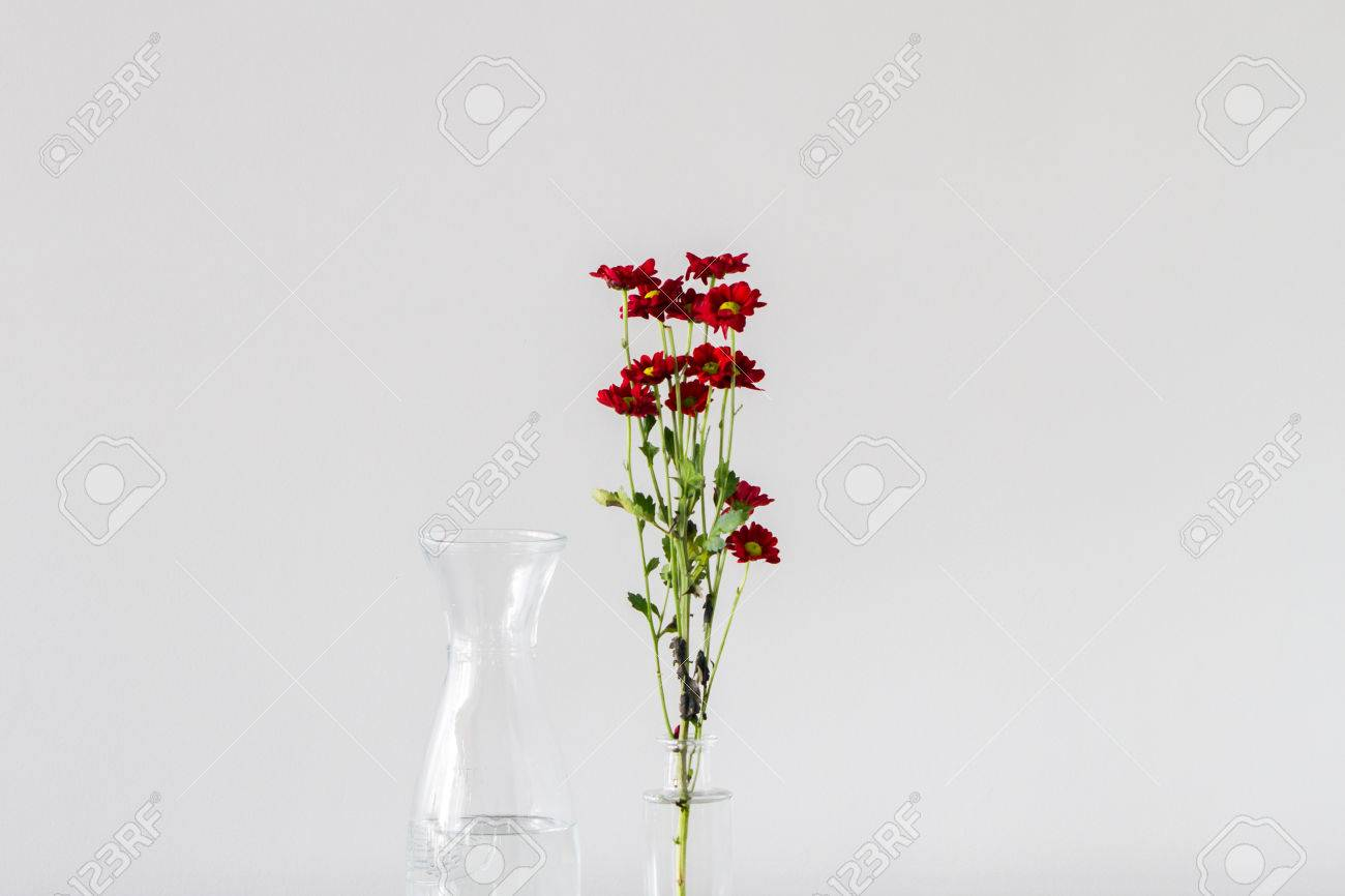 Bunch of red chrysanthemum flowers with yellow centres in a bunch of red chrysanthemum flowers with yellow centres in a transparent glass vase with empty reviewsmspy