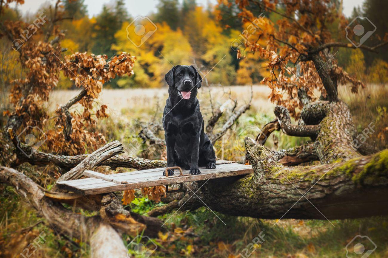 Image result for herfst weekend met de hond photo's