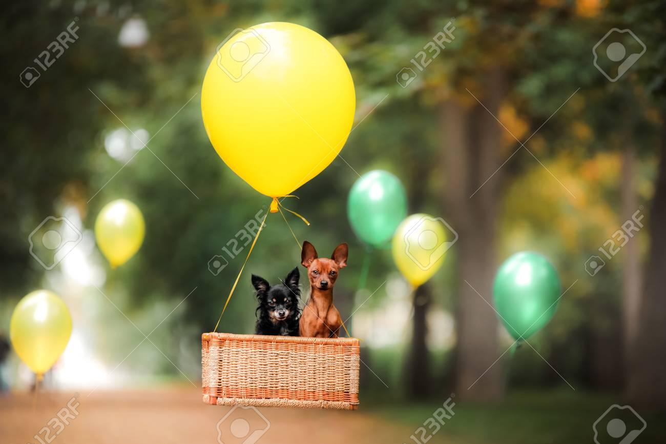Chien Volant chien volant sur le ballon dans le panier. petit animal sur la