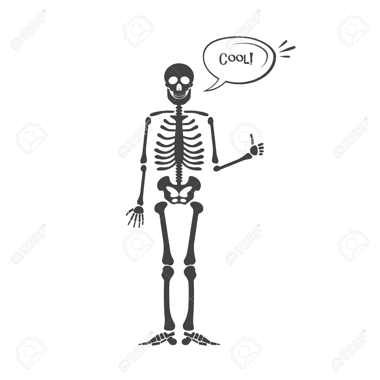 Skelett Menschliche Anatomie. Vektorhalloween-schwarzes Skelett ...