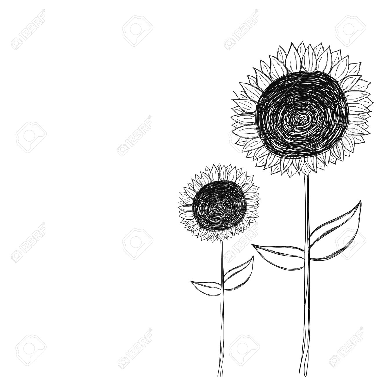 Black And White Sunflower Doodle Vector Royalty Free Cliparts