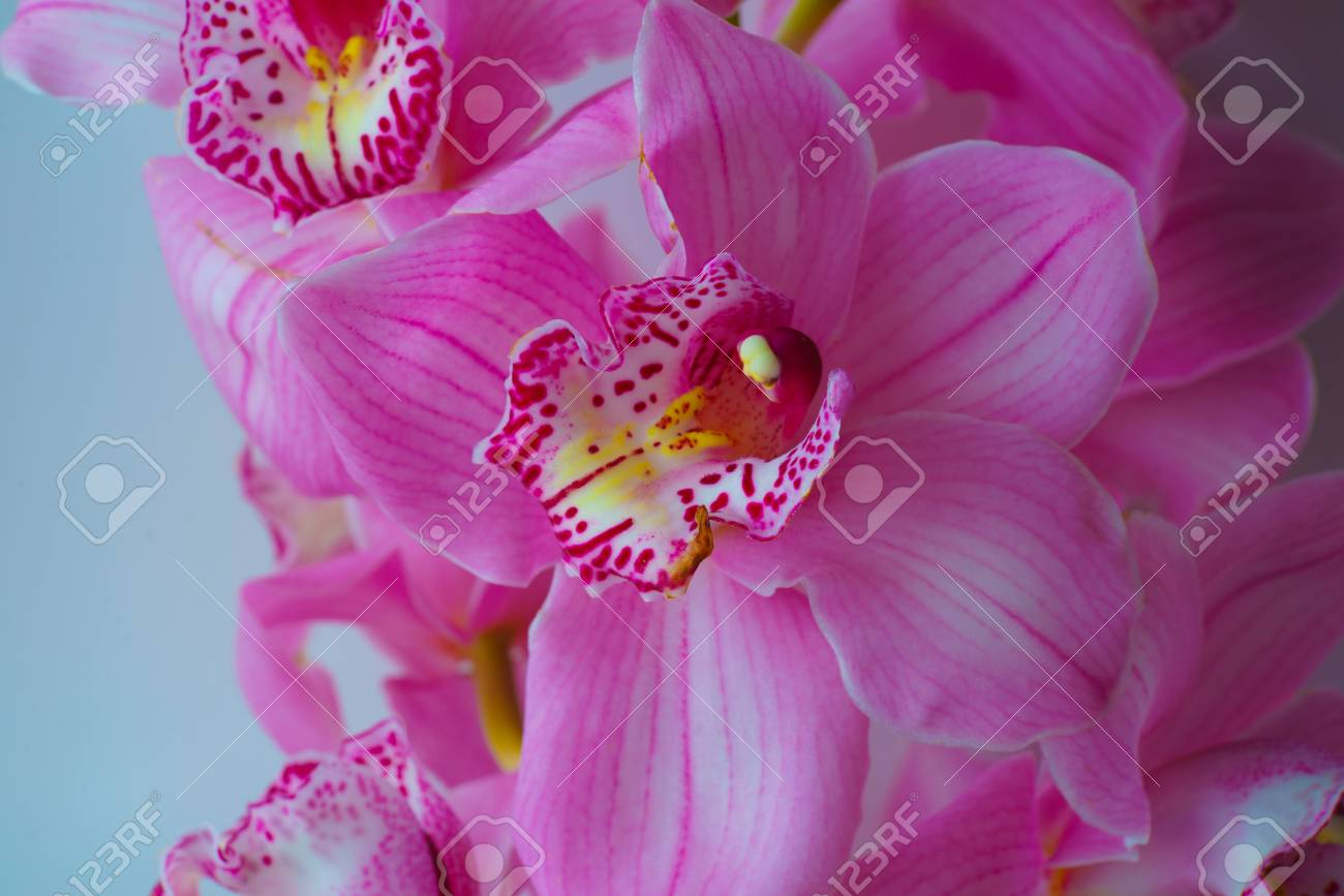 The orchid flowers beautiful floral background for greeting stock the orchid flowers beautiful floral background for greeting cards wallpapers covers phone izmirmasajfo