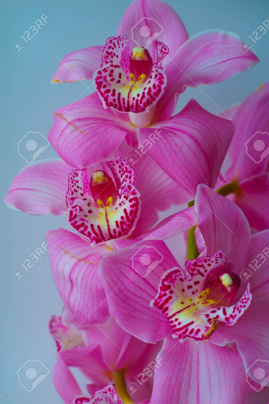 Beautiful Floral Background For Greeting Cards Wallpapers Covers Phone