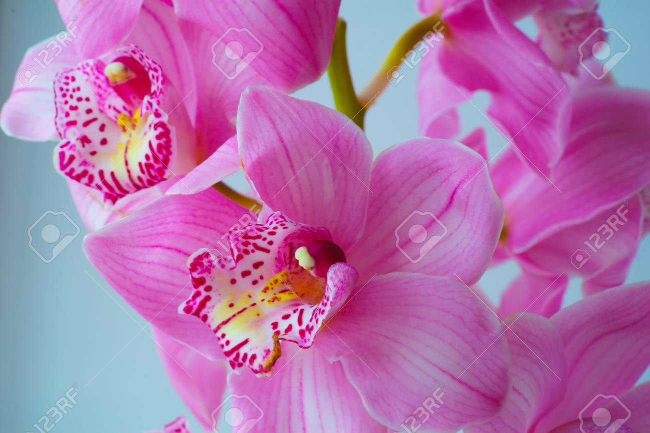 the orchid flowers. beautiful floral background for greeting.. stock