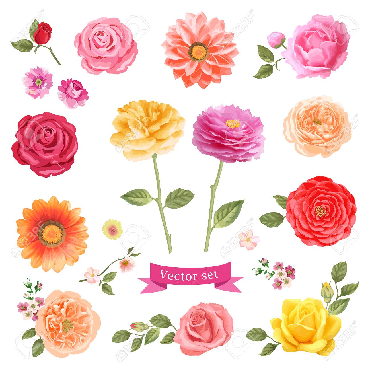 Set Of Vector Flowers Frame Design Elements Stock