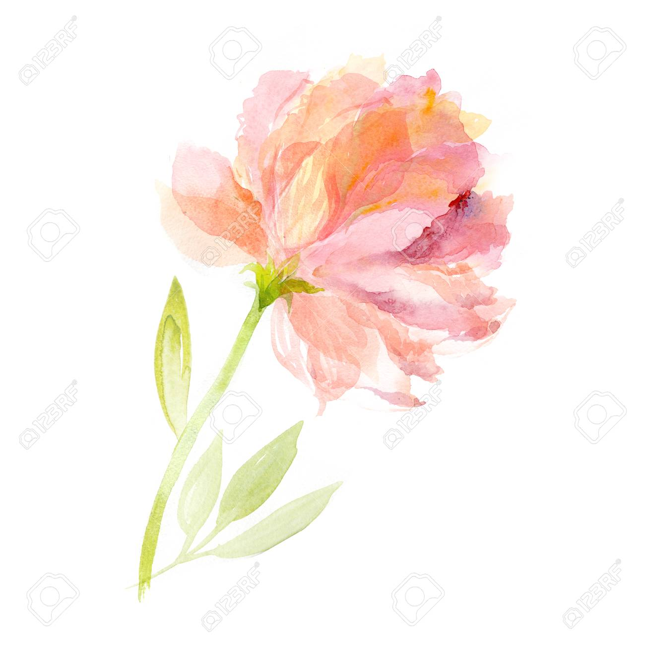 Greeting card. Watercolor flowers background. Pink peony - 64825557