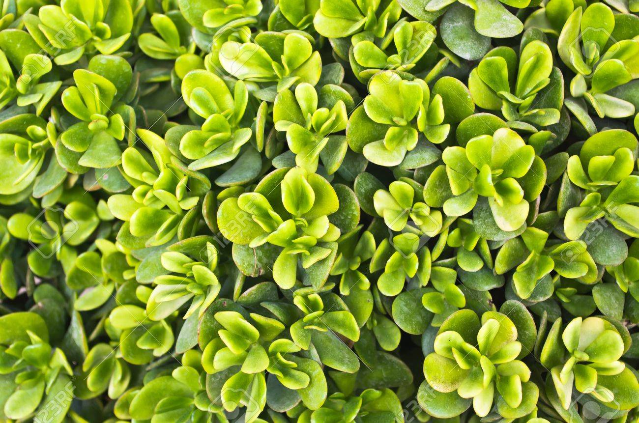 Full frame green succulent plant useful as background stock photo full frame green succulent plant useful as background stock photo 11641476 jeuxipadfo Image collections