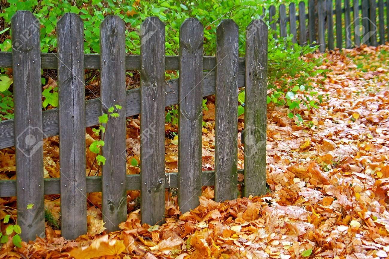 Grau Holzzaun Mit Braunen Ahorn Blätter Im Herbst Lizenzfreie