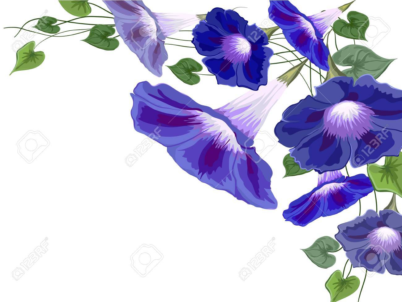 Flowers Bells Convolvulus Ivy Painted White Background With