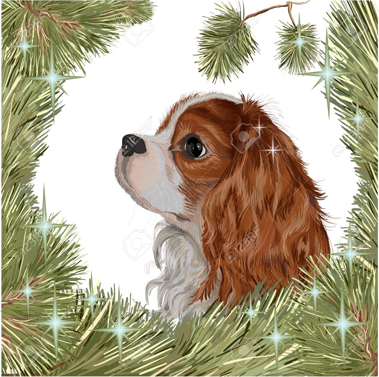Vector realistic drawing cute breed of dogs cavalier king charles vector vector realistic drawing cute breed of dogs cavalier king charles spaniel a symbol of the year 2018 of the dog the head of ehglish toyspaniel altavistaventures Choice Image