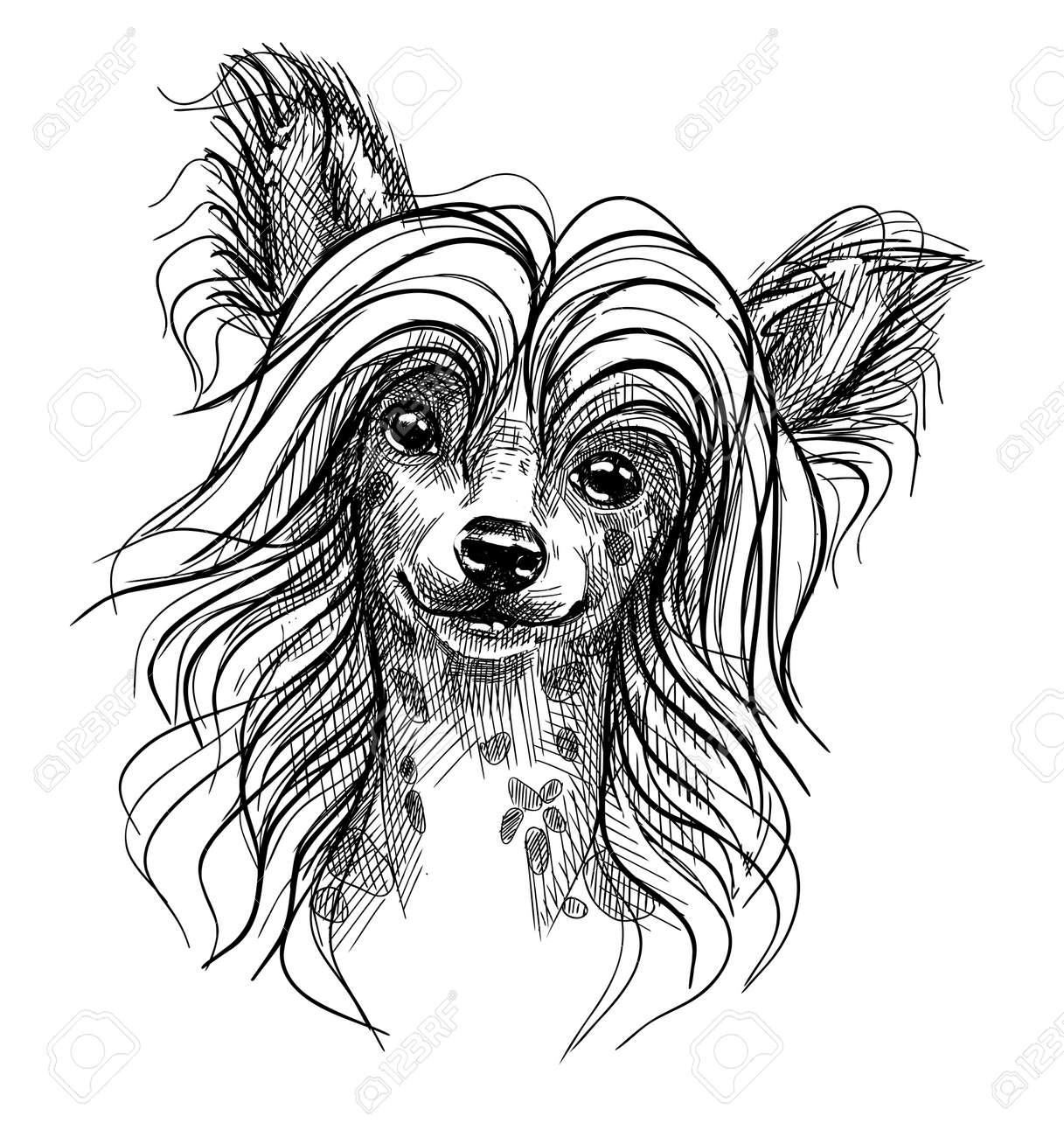 Portrait of a small dog, a Chinese crested puppy. Hand-drawn sketch with black and white pen, realistic vector illustration. Isolated background. - 158432592