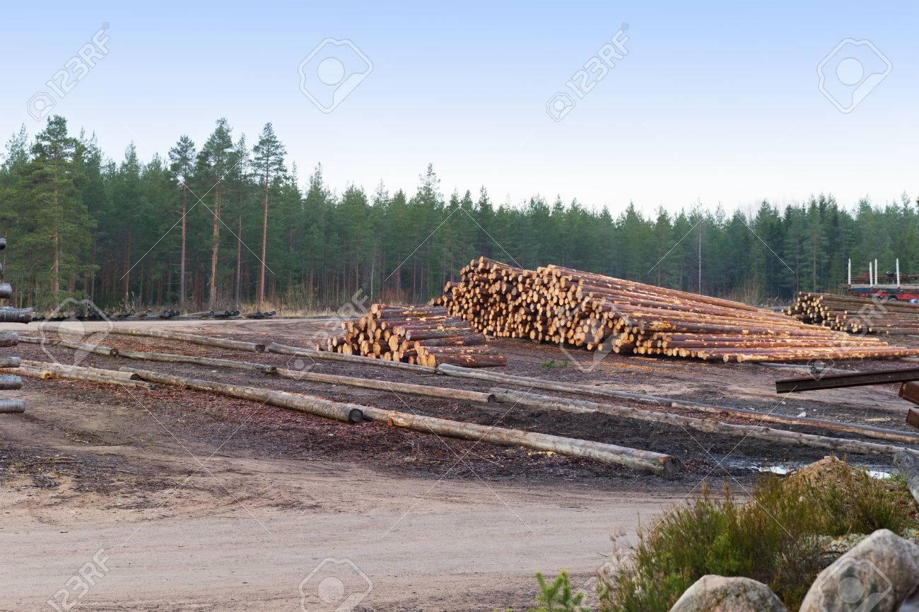 Entwaldung Wälder, Um Neue Häuser Von Bäumen Zu Bauen Lizenzfreie ...