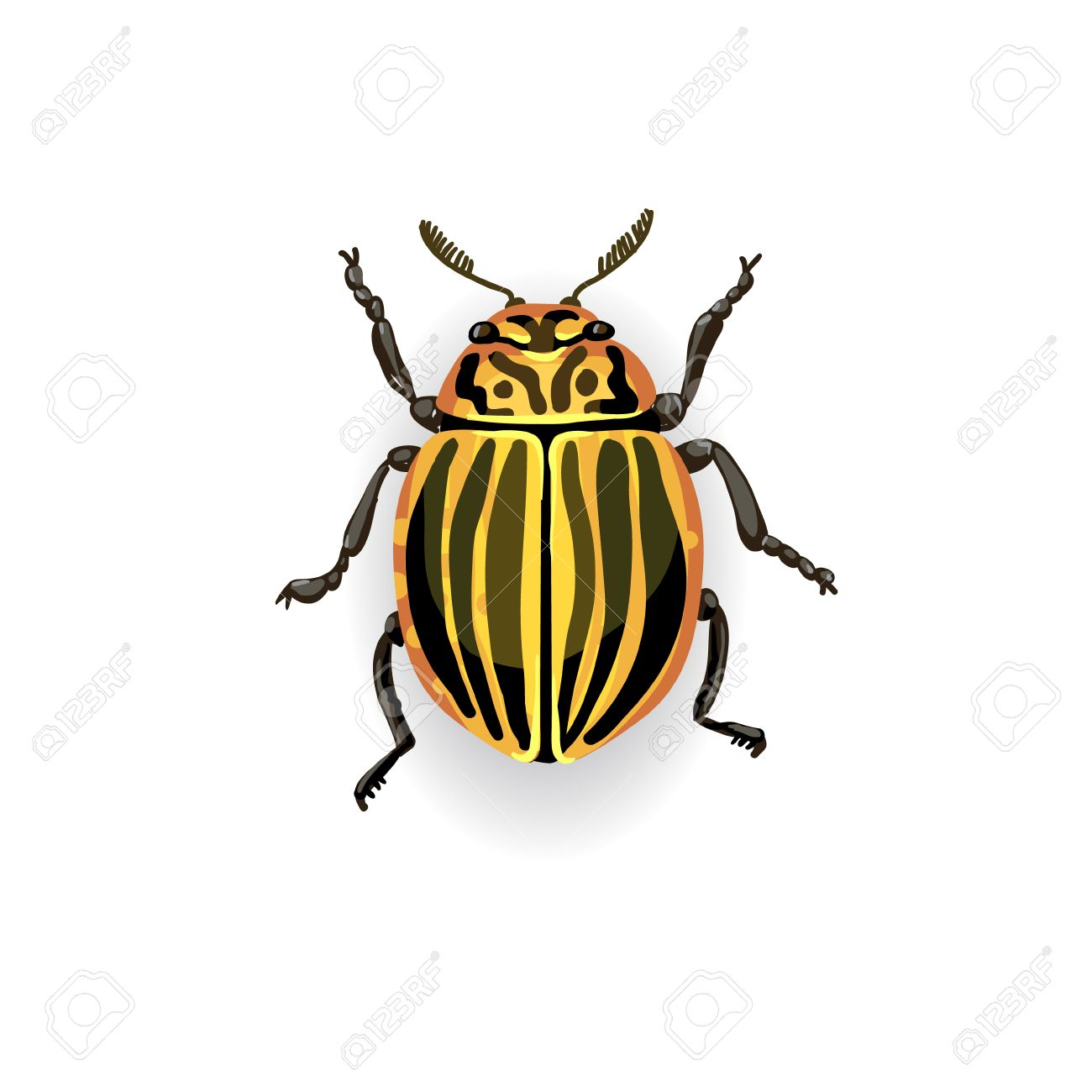 colorado potato beetle colorful vector drawing of small striped