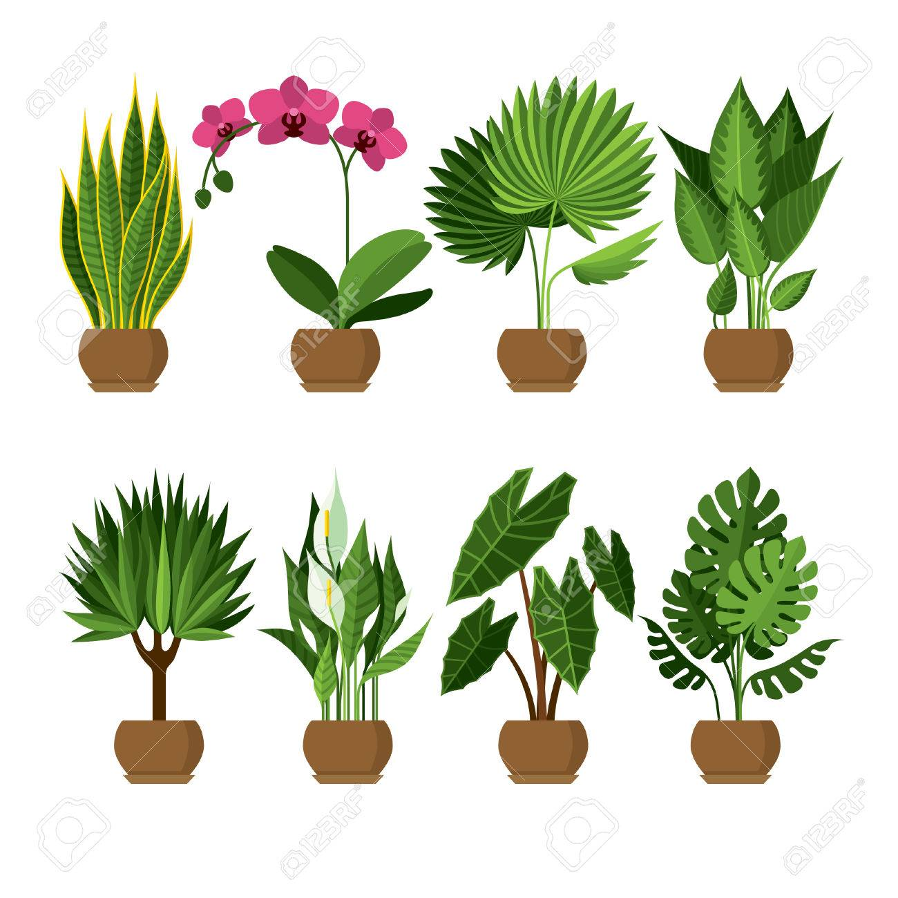 decorative plants for office. vector collection of indoor, house plants in pots. home decorative and deciduous for office d