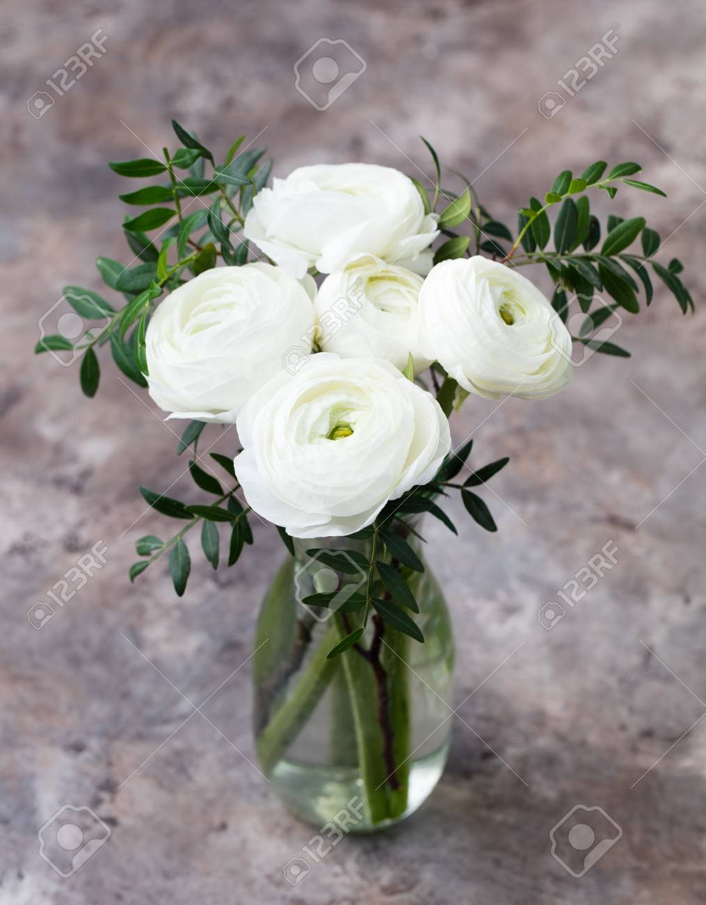 White ranunculus flowers in a glass vase grey background copy stock photo white ranunculus flowers in a glass vase grey background copy space mightylinksfo