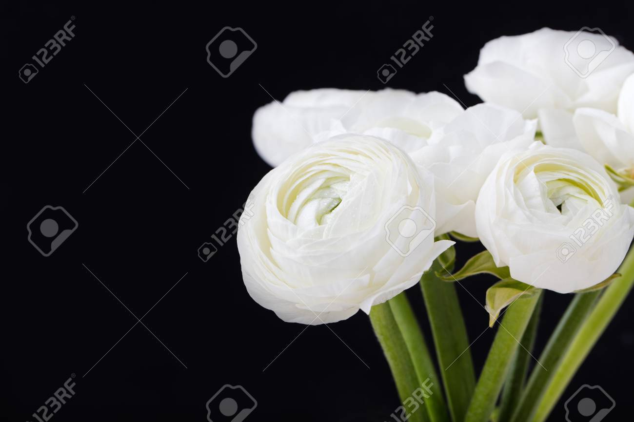 White ranunculus flowers in ceramic vase black background copy stock photo white ranunculus flowers in ceramic vase black background copy space mightylinksfo