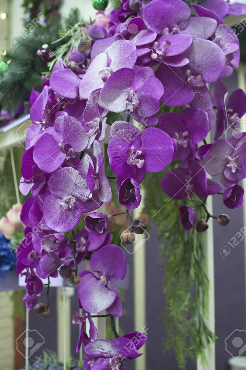Bouquet Of Bright Pink And Purple Flowers Hanging From The Roof