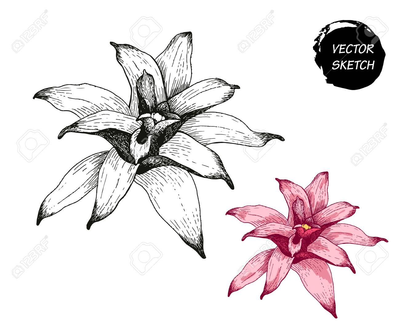 Vector Illustration Of Tropical Flowers In Sketch Style For Design