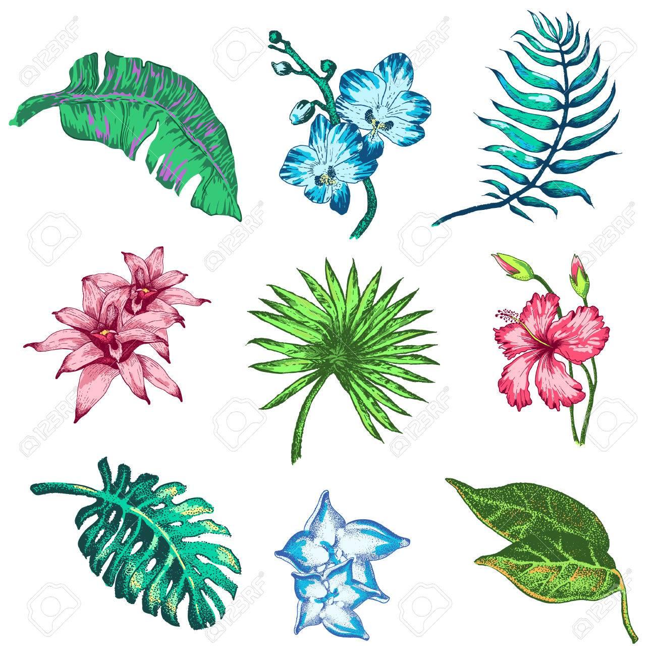Ilustracion Del Vector De Las Flores Tropicales Y Palmeras En El