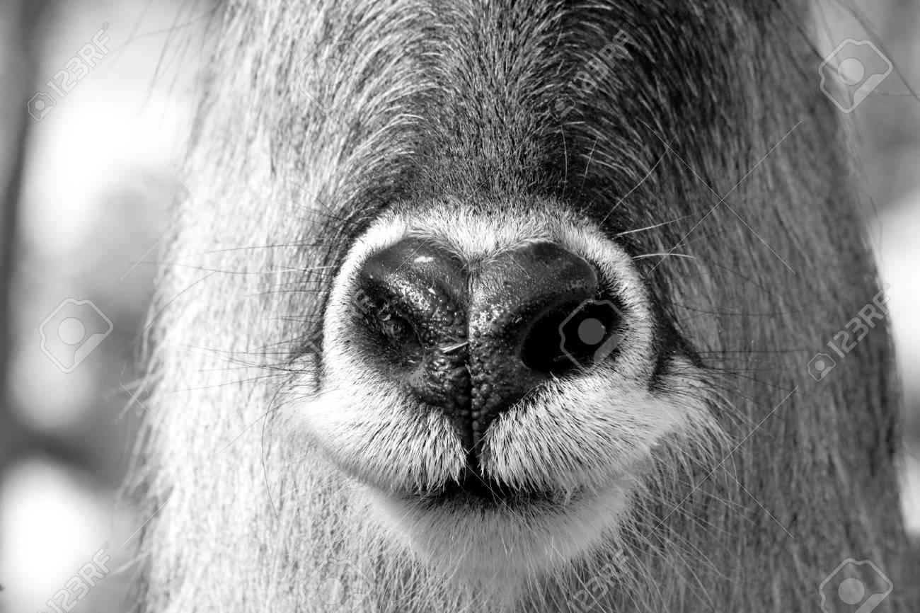 Animal nose close up photo Stock Photo - 22759025