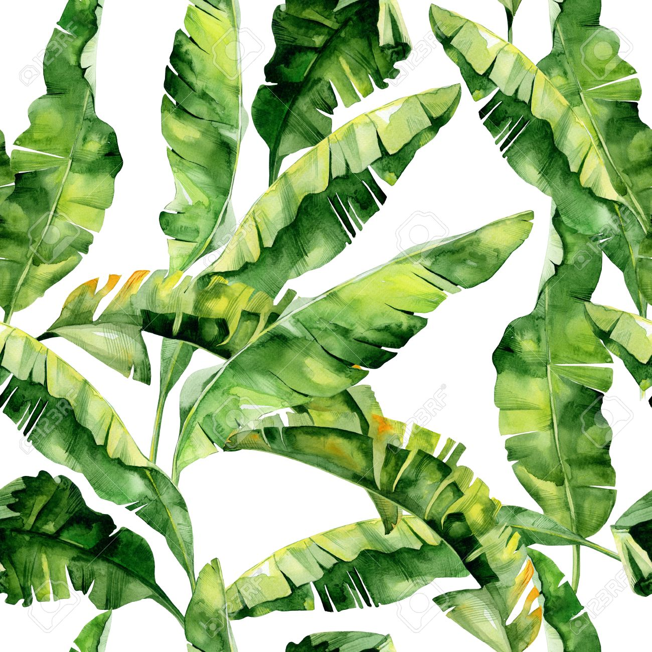 Seamless Watercolor Illustration Of Tropical Leaves Dense Jungle Stock Photo Picture And Royalty Free Image Image 72090762 Folkart® stencil, tropical leaf motif. seamless watercolor illustration of tropical leaves dense jungle