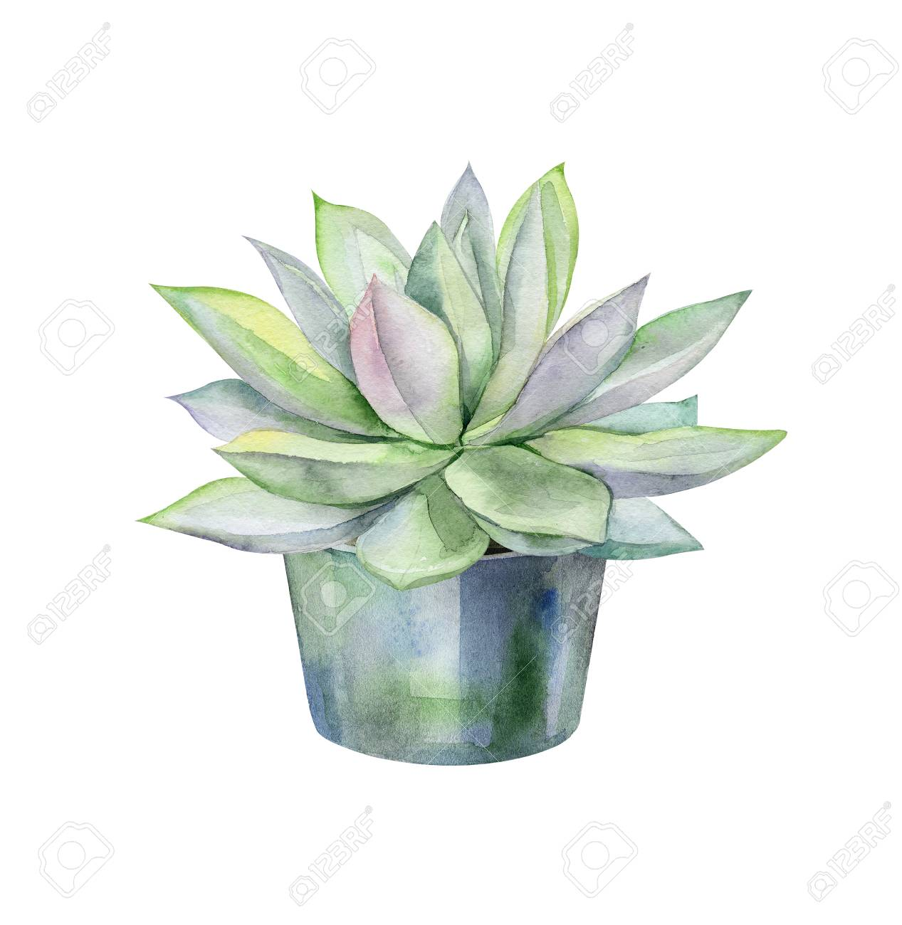 Watercolor Succulents Green Bouquet Echeveria Illustration Stock Photo Picture And Royalty Free Image Image 107132044