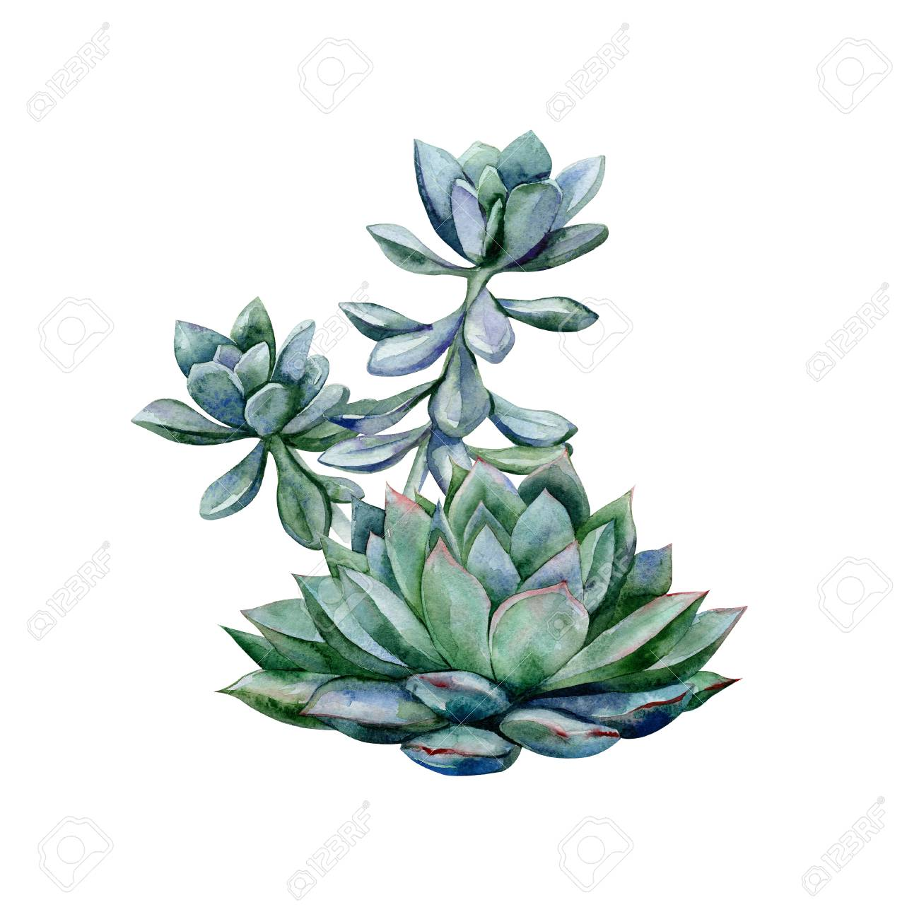 Watercolor Succulents Green Bouquet Echeveria Illustration Stock Photo Picture And Royalty Free Image Image 110949861