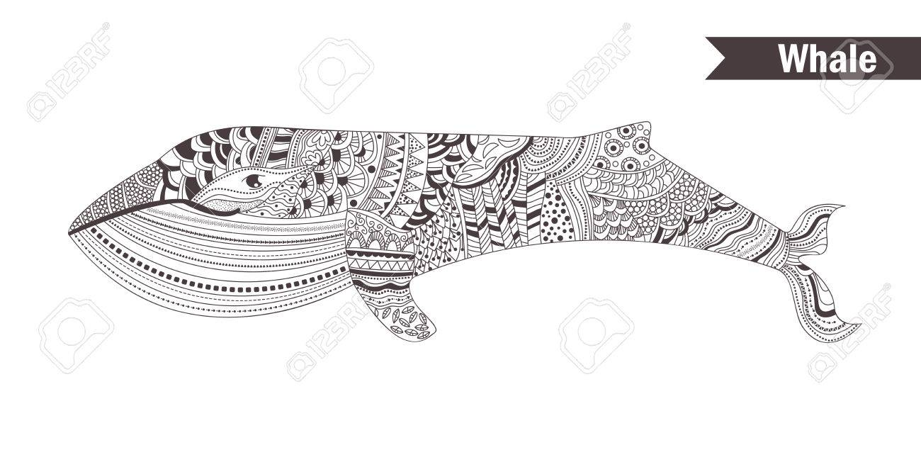 Coloring book whale - Whale Coloring Book For Adult Antistress Coloring Pages Hand Drawn Vector Isolated Illustration