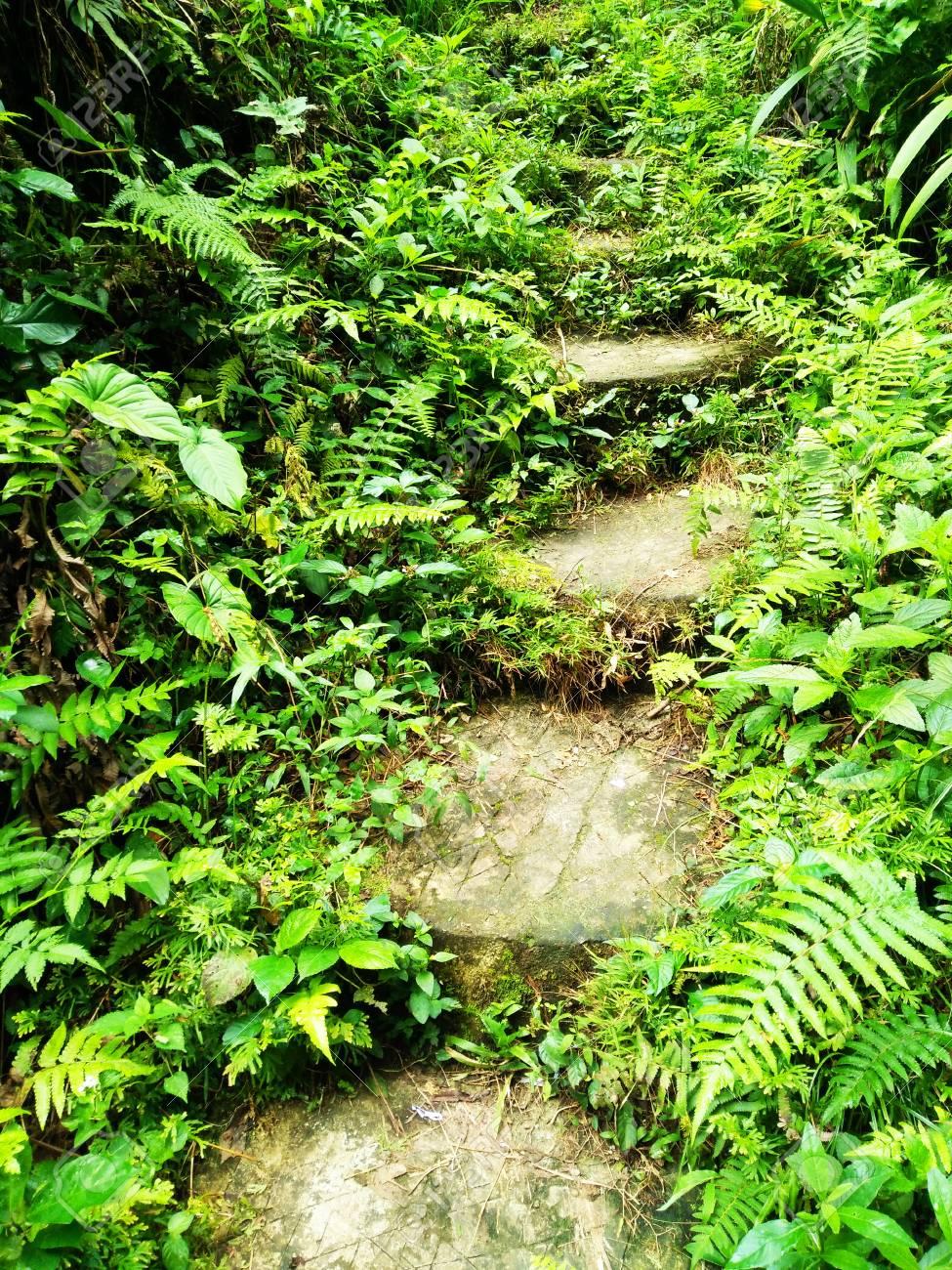 Jungla Tropical Cool Tropical Jungle With Jungla Tropical Amazing