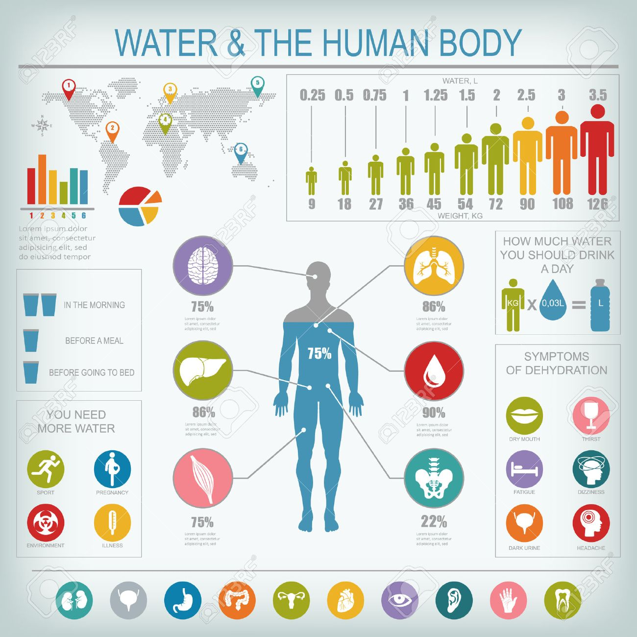 Water and human body infographic. Useful information about water. Concept of healthy lifestyle. Drink more water. - 51557280