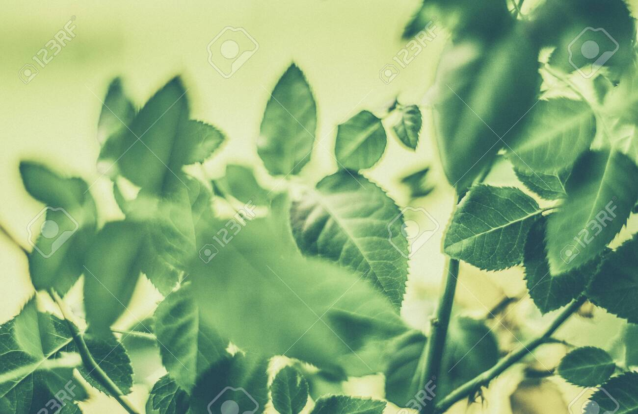 Plant Ecology And Bio Concept Green Leaves As Abstract Vintage Stock Photo Picture And Royalty Free Image Image 139211918