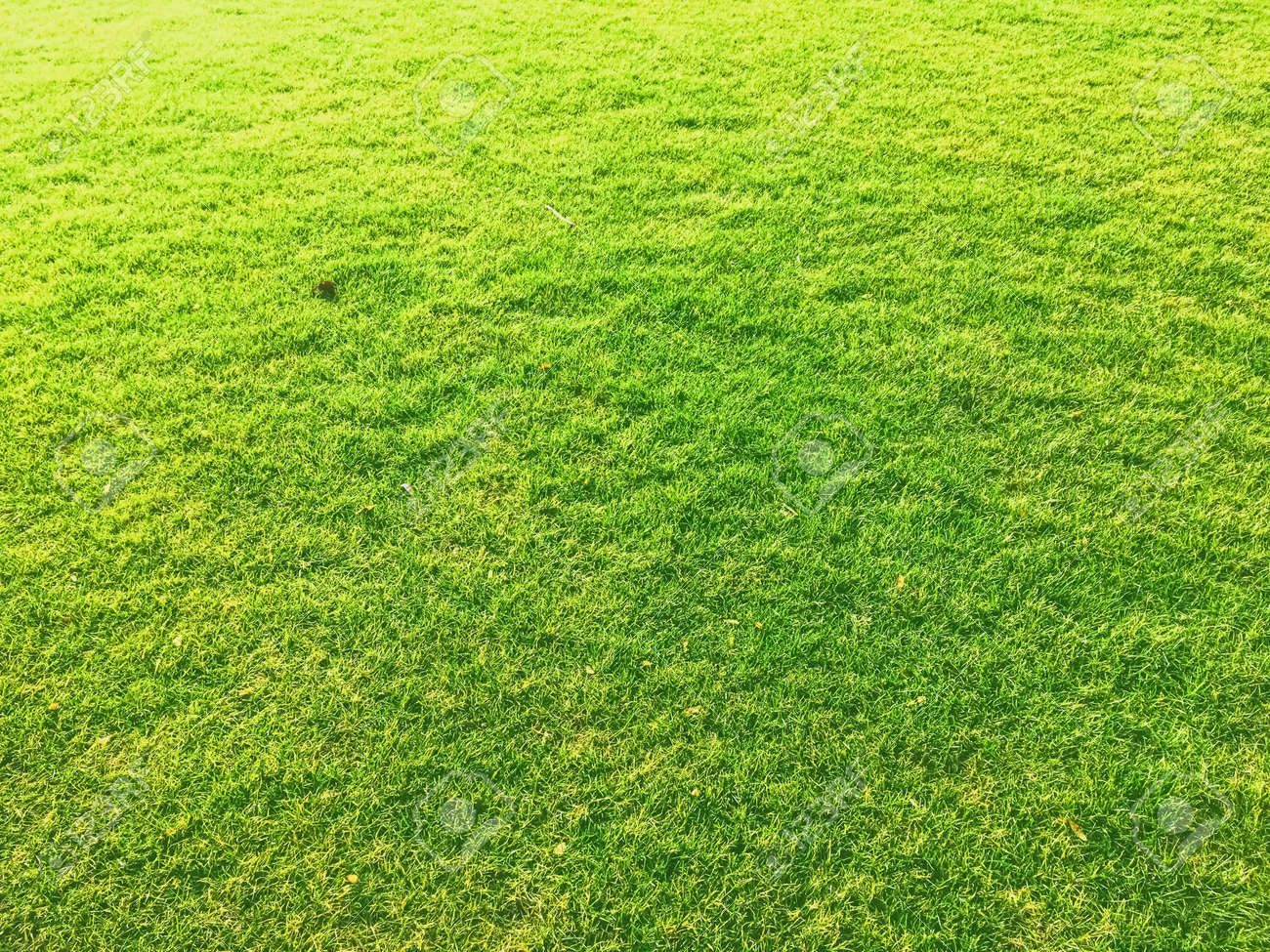 Green grass lawn as background, nature and backyard - 147131017