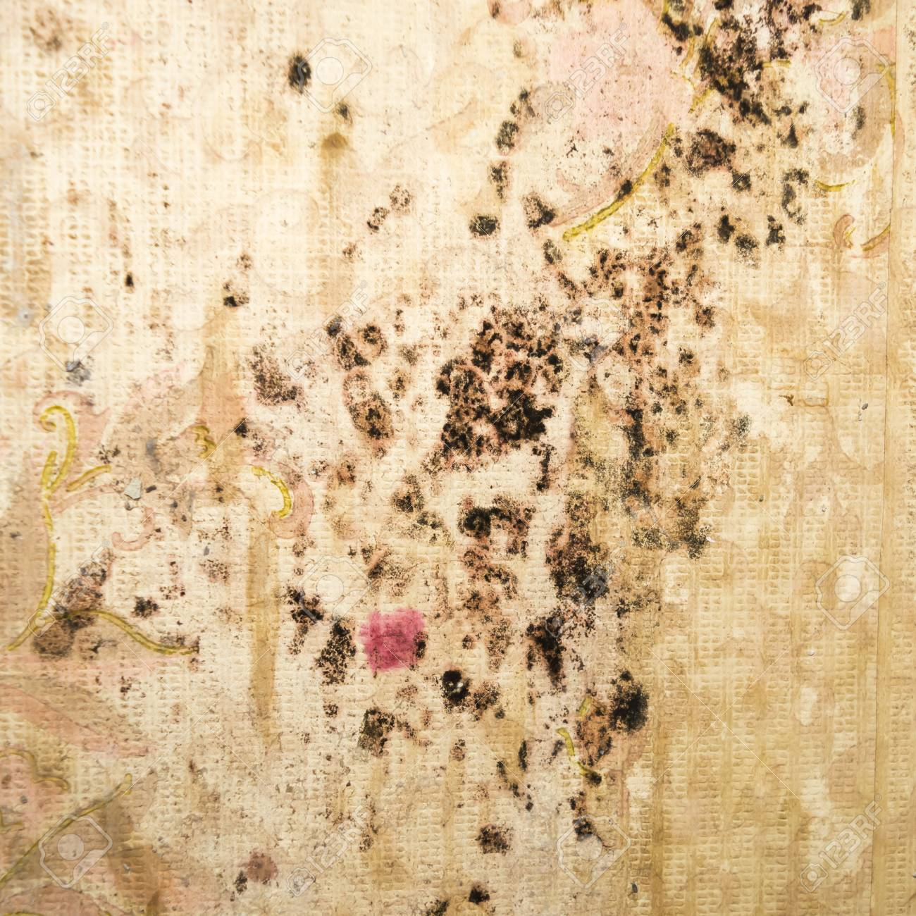 Fungus On Old Wallpaper Stains Of Black Mold The Wall Close Up