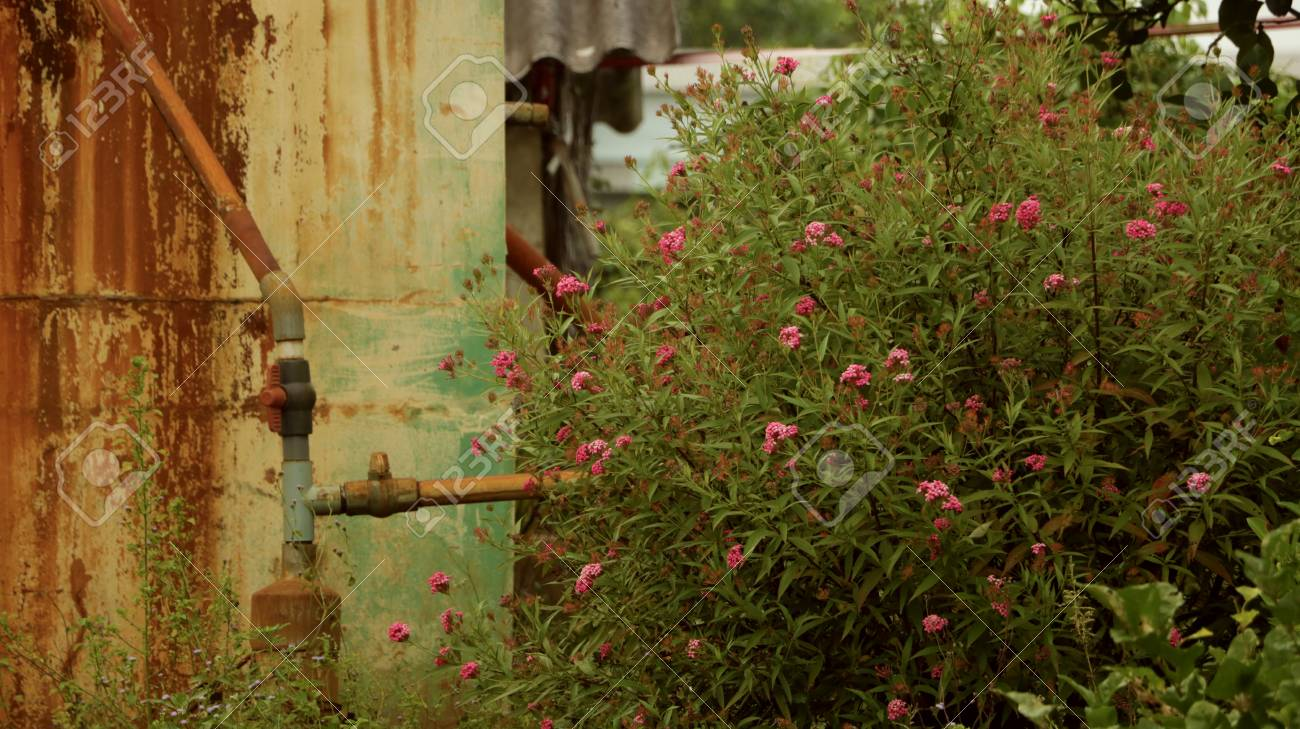 Pink Wild Flowers With Vintage Water Pipe Valve - Retro Wall.. Stock ...