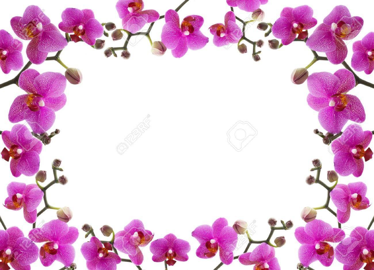 Cerca De Un Marco De Hermosas Orquídeas En El Fondo Blanco Fotos ...