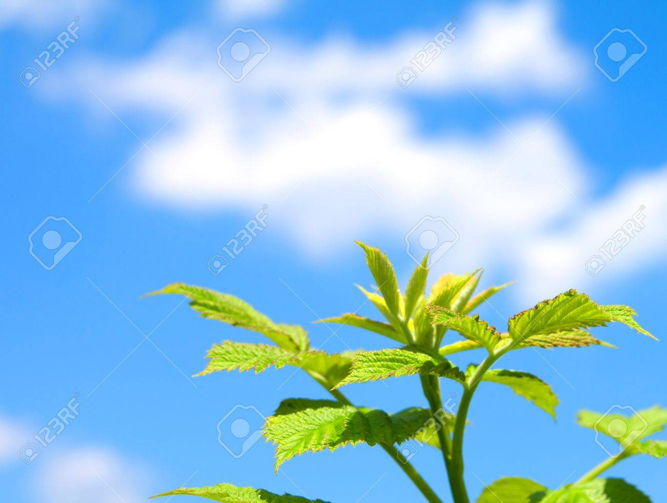 green sprout on blue sky Stock Photo - 7707263